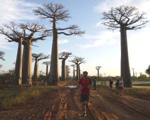 BaobabAvenue