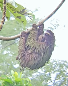 A sloth, which I was starting to feel like...